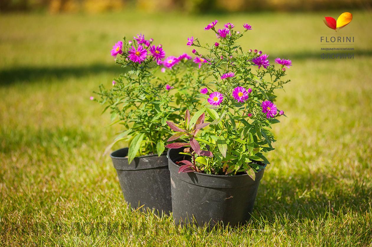 Купить рассаду в Санкт-Петербурге для сада и огорода 52