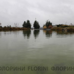 florini-2015-ель-пруд-питомник