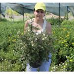 florini-лапчатка-тилфорд-крем-15-06-14-17