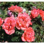 florini-роза-канди-раффлс-15-07-22-002