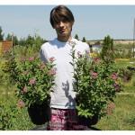 florini-спирея-энтони-ватерер-15-06-14-32