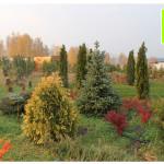 photo-florini-2014-10-10-21-хвойные-осень-клумба-питомник