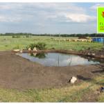 photo-florini2013-06-19-питомник-пруд