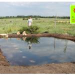 photo-florini2013-06-20-питомник-пруд