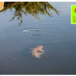 photo-florini2013-06-21-питомник-пруд