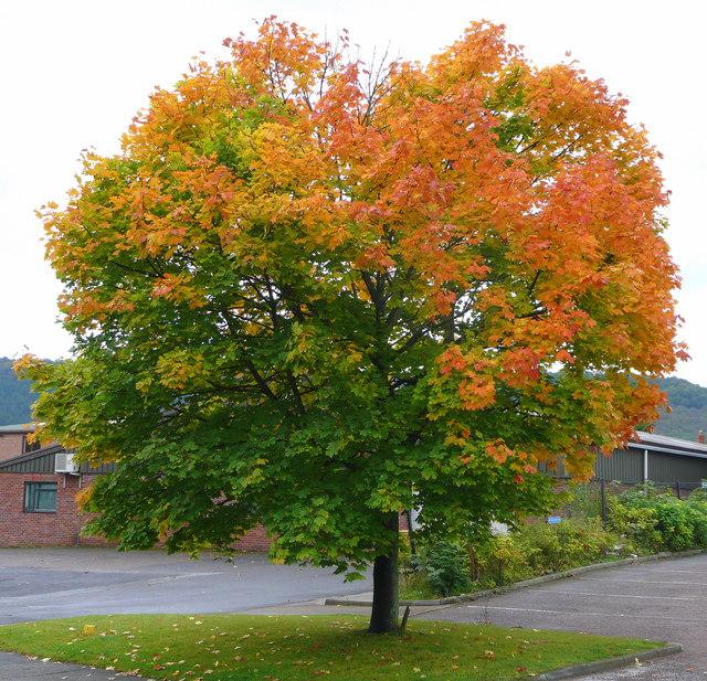Крона дерева Формирование кроны дерева