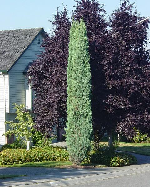 Растения медоносы с фото