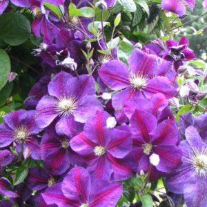 Рассада многолетних цветов купить многолетники оптом