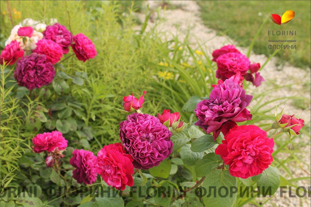 florini-2016-06-21-роза-шекспир-01