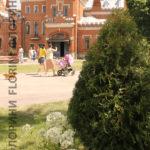 florini-2016-07-10-рамонь-выставка-туя-можжевельник-гортензия-15