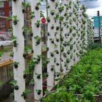 Вертикальный-огород-10