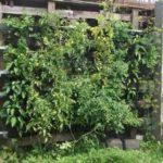 Вертикальный-огород-18
