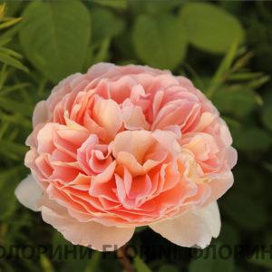 florini-2016-06-21-роза-абрахам-дерби-03