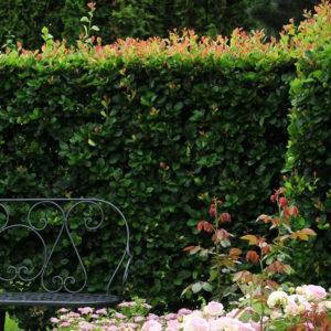 Боярышник сливолистный <br>Crataegus prunifolia