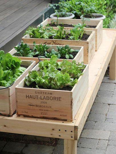 Куда и как сажают овощи ландшафтные дизайнеры?