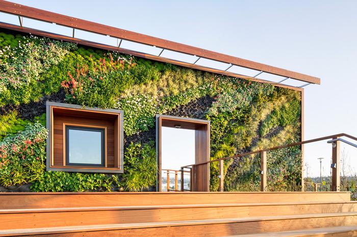Что такое  вертикальное озеленение? Чудо света ради любви!